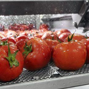 Procesado de frutas y verduras