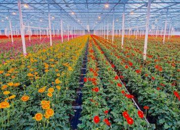 dioxido de cloro horticultura page 2